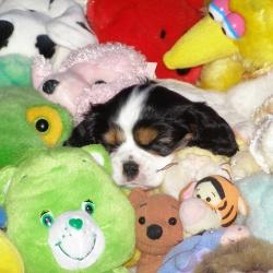 Puppy-pics-(4)
