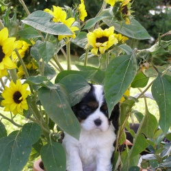 Puppy-pics-(8)